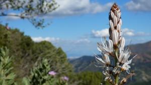 Flora y Naturaleza Costa del Sol