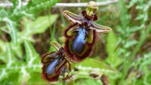 flora orquídeas Costa del Sol