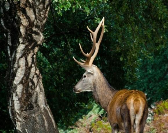 ciervo ecoreserva