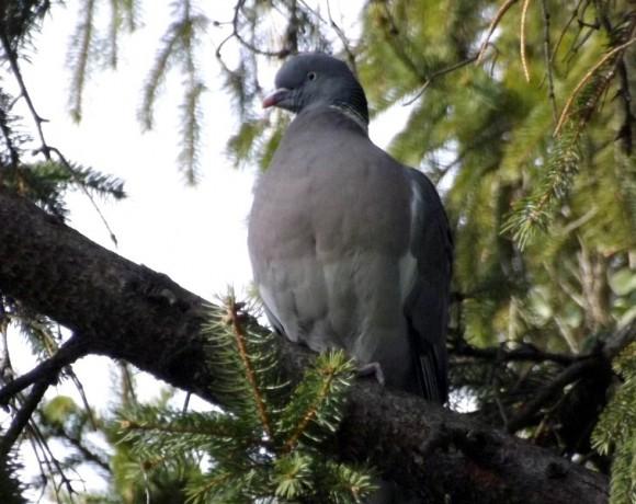 otras-aves-2