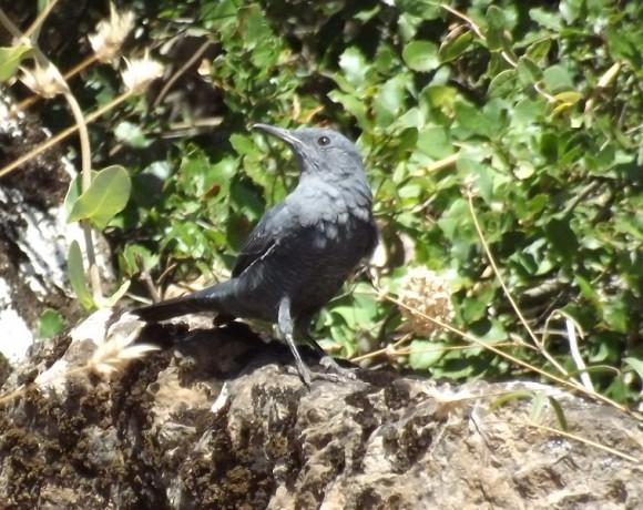 otras-aves-3