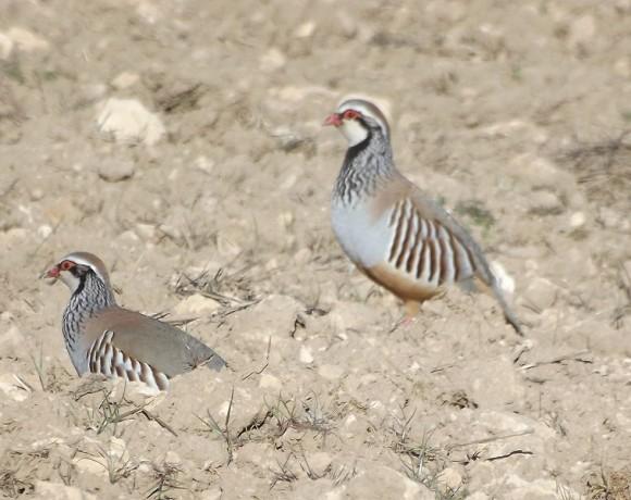 otras-aves