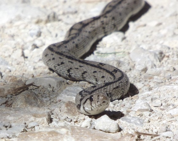 reptiles-1