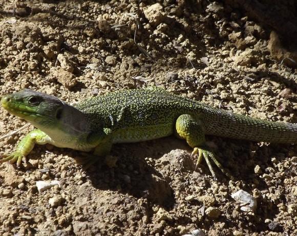 reptiles-10