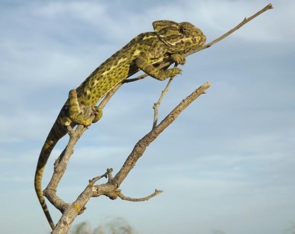 reptiles-3