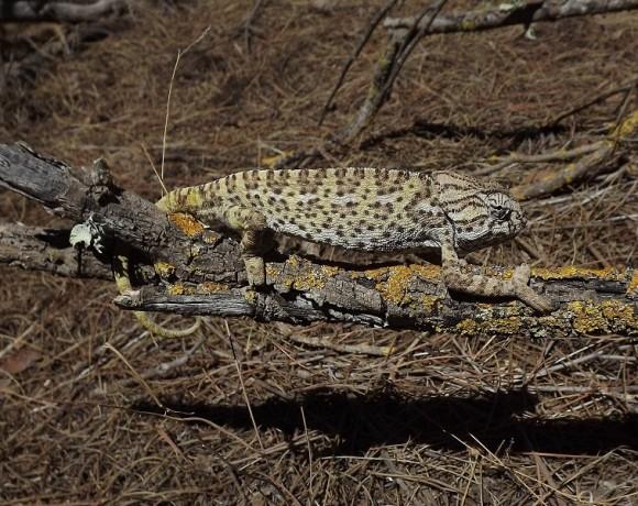 reptiles-4