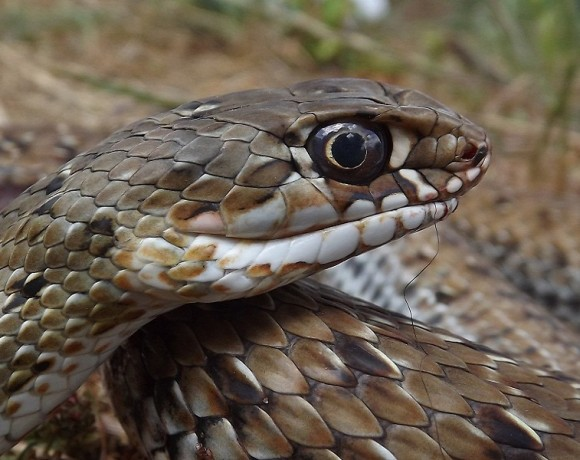 reptiles-7