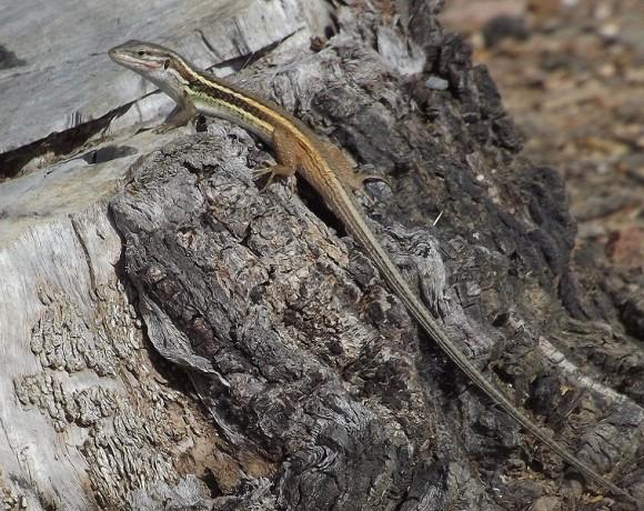 reptiles-8
