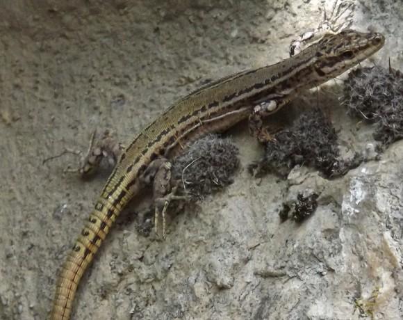 reptiles-9