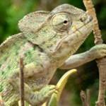 Reptiles/Anfibios